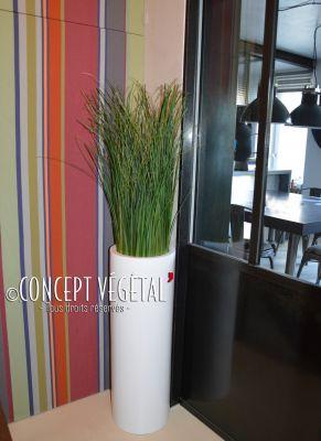 herbe gramin e plantes arbres stabilis s sur mesure concept vegetal. Black Bedroom Furniture Sets. Home Design Ideas