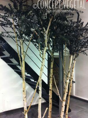 arbres sur mesure stabilis s et semi naturels. Black Bedroom Furniture Sets. Home Design Ideas