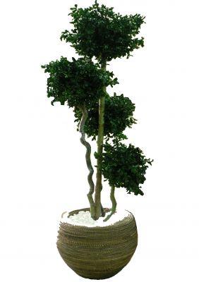 arbres multi boules naturelles artificielles stabilis es